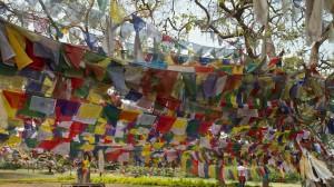 Garden prayer flags at Buddha's birthplace (Lumbini, Nepal)