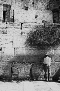 Man pray's under an olive shrub that grows on the Western Wall (Jerusalem, Israel)
