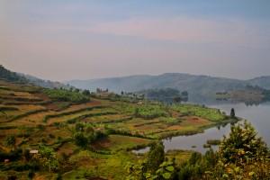Terraced farms in Uganda