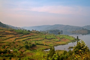 Terraced farms in Uganda Lake District